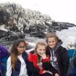 Farne Island 2015
