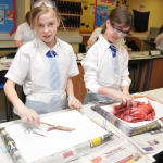 Science Club 2013 10