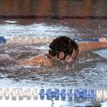 swimming-gala-2013-103